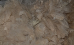 Neperdirbta (žalia) alpakos vilna 1kg