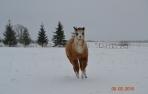 Alpakos vilnos vaikiška liemenė